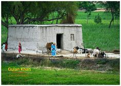 PAKISTAN, Awesome beauty wonderful view ,village life of Punjab, Pakistan Life Is Beautiful, Beautiful Homes, Beautiful Places, Azad Kashmir, Pakistan Travel, Life Photo, Outdoor Gardens, Outdoor Furniture Sets, Places To Visit