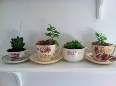 Antique father cups with succulents.