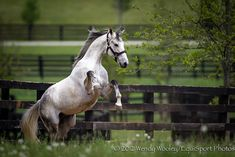 2005 Kentucky Derby winner, Giacomo at Adena Springs by wendyu, via Flickr