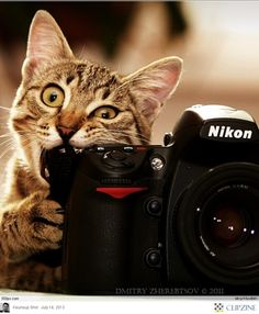 I have talents besides meowing and purring. #cats #photography