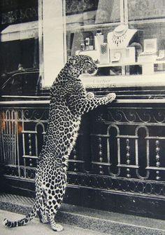 Daido Moriyama - Les Must de Cartier. equals the famous Cartier Panther ring! Beautiful Creatures, Animals Beautiful, Cute Animals, Hello Beautiful, Beautiful Soul, Ansel Adams, Mode Poster, Cartier Panthere, Mundo Animal
