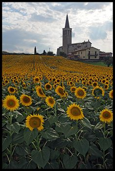 I so want to see the sunflowers! Spoleto, Italy, province of Perugia Umbria Oh The Places You'll Go, Places To Travel, Places To Visit, Umbria Italy, Perugia Italy, Beautiful World, Beautiful Places, Stunningly Beautiful, Sunflower Fields