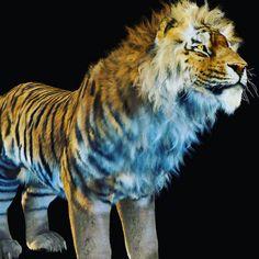 Benson Njenga 3d Illustrations, Creature Design, Modeling, Concept Art, Creatures, Characters, Animals, Inspiration, Instagram