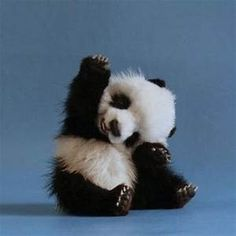 cute baby animals - Yahoo Image Search Results