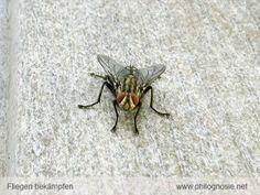 Fliegen Wohnung biologisch fernhalten
