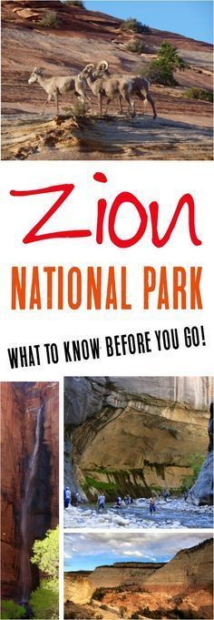 Read these Zion National Park Hikes for the best hikes, tips on what to wear, what to bring, + more before you plan your visit to Zion! #nationalparks #usa #nationalparksusa #camping #hiking #hikingtips #hikingarches #hikes #zionnationalpark #hikinguse @hikingmoab #seeingmoab #seeingarches #southernutah #kids #kidfriendly #familyfriendly #campingtips #zionnaptionalpark #utahnationalparks #beutahful #getoutside #outdoors #getoutdoors #getoutside #roadtrip
