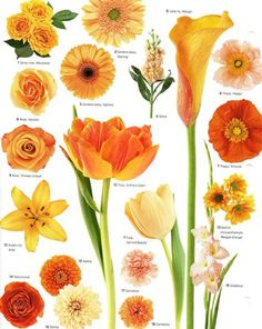 Flower Names By Color Beautiful Flowers Pinterest Flowers