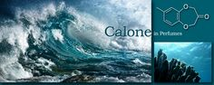 """Its chemical name is methylbenzodioxepinone, trade-named Calone 1951introduced to perfumery by Pfizer in 1966. Calone is similar in structure to certain alicyclic C11-hydrocarbons like ectocarpene, produced by some species of brown algae as pheromones. This is why it gives rise to its intense """"marine"""" odour property with slight floral overtones.  It is a very important fragrance component. Please read more http://on.fb.me/1SThqw1 Also visit www.cplaromas.com"""
