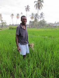Growing rice in Torbeck, located in the South of Haiti. Growing Rice, Haiti, Men Casual, T Shirts For Women, Places, Mens Tops, Shopping, Style, Swag