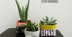 Sadly I don't have a green thumb and over the years I've managed (not intentionally, of course) to kill tons of different house plants, eve...