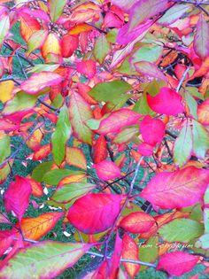 Fall Color, Lake Washington, Seattle, Washington