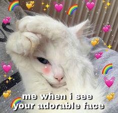 Cute love memes, cute cat memes, love you meme, funny love, i Cute Cat Memes, Cute Love Memes, Funny Love, Memes Humor, Funny Memes, Animal Memes, Funny Animals, Cute Animals, Funny Shit