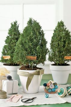 Inexpensive Green Holiday Decor, Handmade Christmas Decorations and Table Centerpieces Christmas Plants, Small Christmas Trees, Christmas Flowers, Noel Christmas, All Things Christmas, Winter Christmas, Xmas Trees, Christmas Greetings, Christmas Christmas