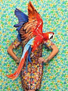 #Tropical #colors #bird #TATİL #aquaflorya #Yeşilköy #florya