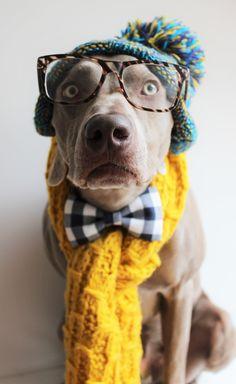 Handmade dog bow tie.. For dogs with love #weimslovakia #obojok #motylikprepsa