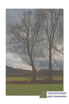 Trees in Bavaria
