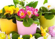 Böcekler Sebebiyle Kuruyan Çiçeklerinize Çözüm