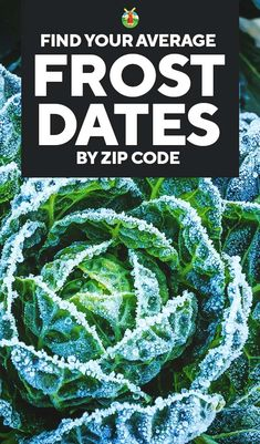 Use this tool to find the average of first and last frost date in your city or state by ZIP code to make sure you start your garden at the right time not too early not too late. Paleo For Beginners, Gardening For Beginners, Gardening Tips, Gardening Quotes, When To Plant Vegetables, Growing Vegetables, Gardening Vegetables, Veggies, Garden Plants
