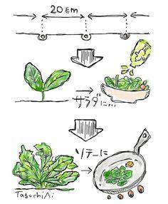 "How to grow ""MANA"""