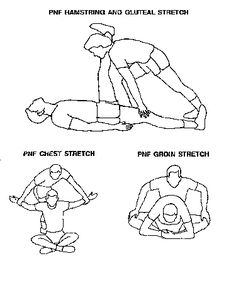 pnf stretching exercises - Google Search