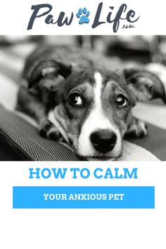 Many dogs and cats suffer from some kind of anxiety at one time or another. Whether caused by loud noises, their annual trip to the vet, or you leaving the house every day, anxiety is hard to deal with.