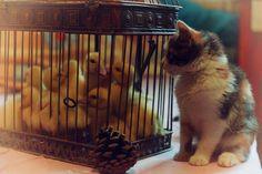 Kitten with Ducklings