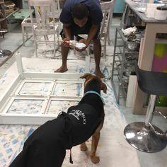 Duke helps Von paint. #rescuedrelicsstudio #rescuedog  #duketheshopdog #diy #paintcouture  #paint  #paintedfurniture