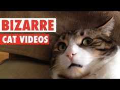 Most Bizarre Cats Compilation 2016 - YouTube