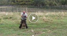Polícia e Cão Mostram Sintonia Perfeita Durante Treino http://www.funco.biz/policia-cao-mostram-sintonia-perfeita-treino/