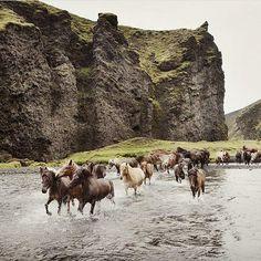 Icelandic horses  by /juliepasternak/ #everydayiceland                                                                                                                                                                                 More