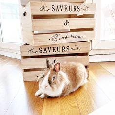 e vous montre pas assez mon bébé lapin d'amour je trouve 😍😍👌🤗 #frenchblogger #blog #instagrammer #picoftheday #pet #rabbits #rabbit #deco