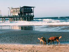 Beach buddies ❤🦁🏖
