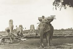 old photo of elephant in siem reap cambodia,Angkor Wat Angkor Vat, Angkor Temple, Battambang, Kampot, Phnom Penh, Old Images, Old Pictures, Photos Du, Old Photos