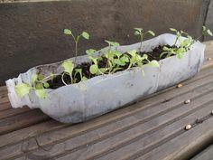 My tasty salad growing in an old milk bottle Urban Gardening, Urban Farming, Container Gardening, Gardening Tips, Old Milk Bottles, Old Milk Jugs, Plastic Jugs, Plastic Bottle Crafts, Lawn Decorations