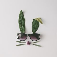 bunny rabbit face made of natural green leaves with sunglasses on bright background. Concept Photography, Minimal Photography, Flat Lay Photography, Still Life Photography, Creative Photography, Photography Gallery, Ideias Fashion, Eyewear, Minimalism