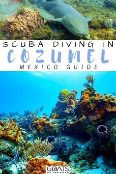 Scuba diving in Cozumel, Mexico is a year-round diving which is one of the best dive destinations in the country. It's one of the top things you can do here. Seeing the vibrantly colored sponges, and marine life like turtles, nurse sharks, and rays. To help here is how to choose a good company to dive with while in Cozumel for diving! | #diving #bestdivedestinations #marinelife
