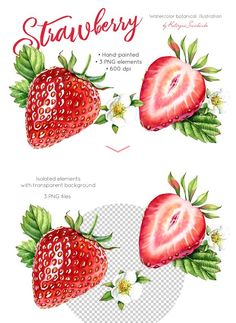 Watercolor Strawberry: whole + half by Kateryna Savchenko on @creativemarket