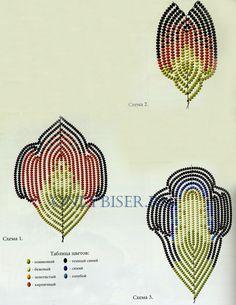 Iris, Schemes 1, 2, 3