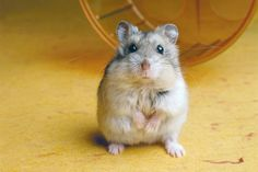 My Hamster Bites - What Can I Do?