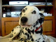Laughter the best medicine and this dalmation thinks so too.   Smorgasbord – Variety is the spice of life