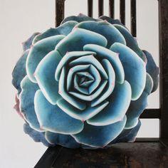 Handmade Succulent Cushion - Jovibarba | dotandbo.com