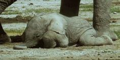 <b>Los elefantes son unas de las criaturas m