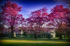 University of Peradeniya Srilanka.