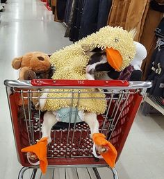 Anxious Rescue Goat Finds Relief In A Duck Costume