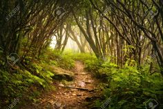 Creepy Forest Stock Photos, Pictures, Royalty Free Creepy Forest ...