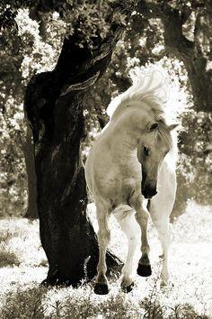 Horse / Stallion Dances In Sepia Photograph - Carol Walker photo