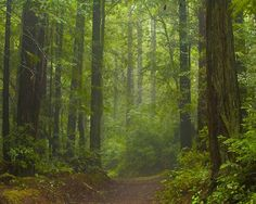 forest trail/Honeymoon must