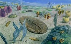 """Life in the Ediacaran. Selenium isotope study shows """"slow fuse"""" of oxygen leading to complex life over 100 million years or so."""