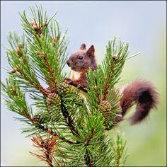 Squirrel by Richard de Waard on 500px