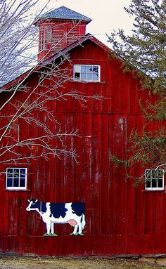Red Barn with cow